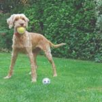 Rosewood Catch & Play Tennis Ball
