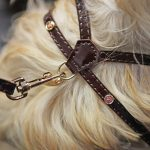 Rosewood Oxblood Harness