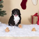 Fringe Studio Christmas Minis Ginngerbread 3-Piece Plush Dog Toy Set