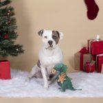 Fringe Studio Oh Snap! Plush Dog Toy