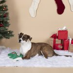 Fringe Studio Christmas Rex Durable Plush Dog Toy
