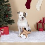 Fringe Studio Christmas Reindeer Face Durable Plush Stuffing Free Dog Toy