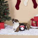 Fringe Studio Christmas Holiday Penguin Durable Plush Stuffing Free Dog Toy