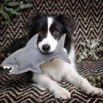 Outback Tails Toys – Shazza the Great White Shark