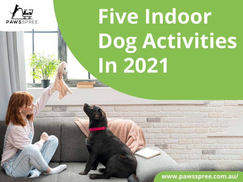 Five Indoor Dog Activities In 2021