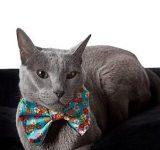 Paw 4 Friends_Cat1